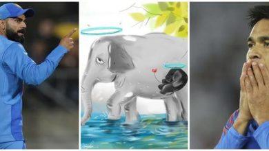 Photo of गर्भवती हथिनी की मौत पर फूटा खिलाड़ियों का गुस्सा